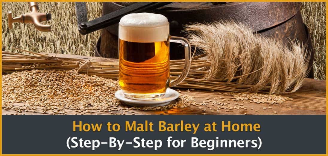 How to make malted barley