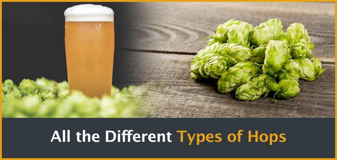 All the Different Types of Hops