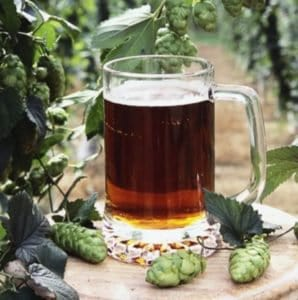 bravo hops with beer