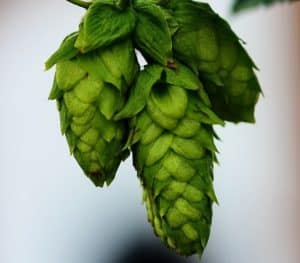 3 pcs hanging hops