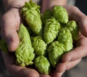 handful hops